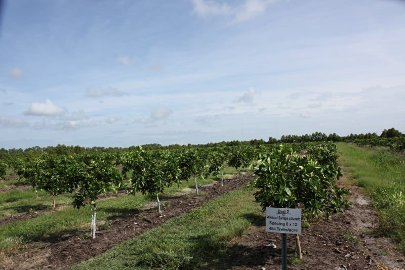 Citrus Farmers Training Program